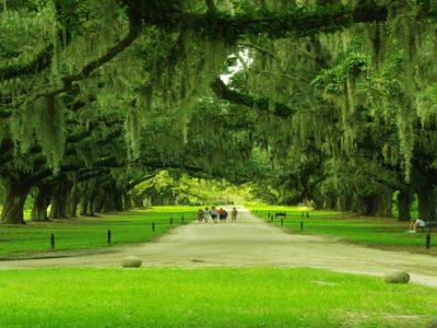 Angel Oak park charleston - Southern Charm and Hospitality of Charleston